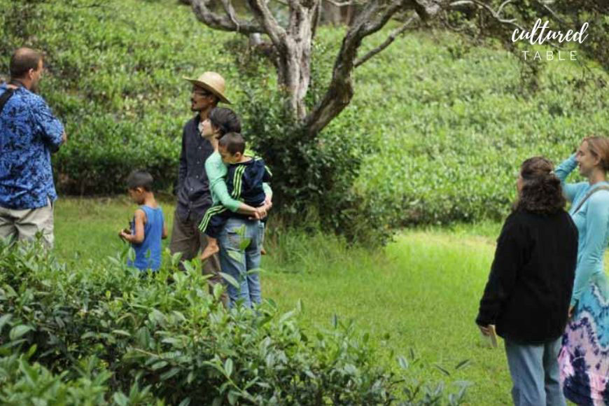tea farm tour hawaii